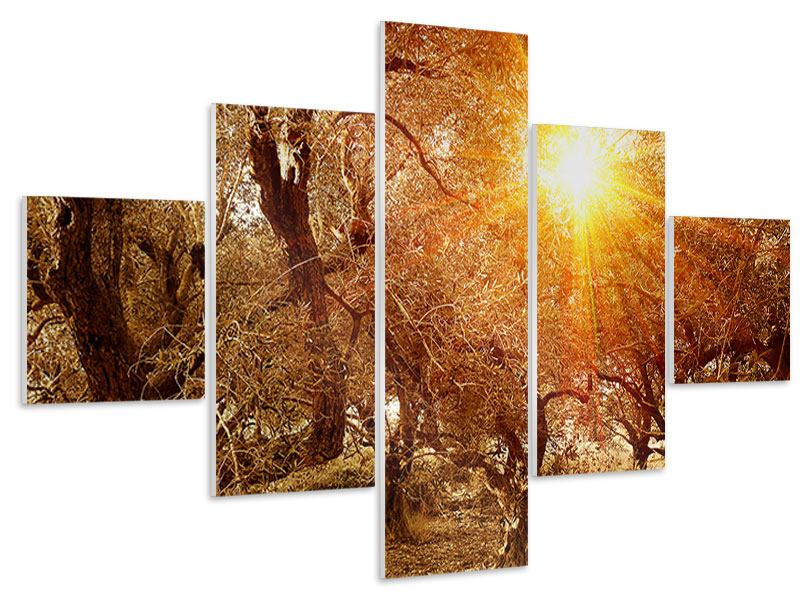 5 Piece Forex Print Olive Trees In Autumn Light
