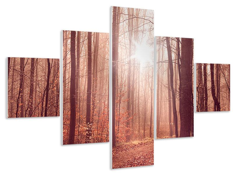 5 Piece Forex Print Sunset In Autumn Forest