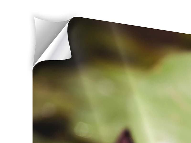 3 Piece Self-Adhesive Poster Lilies At Sunrise