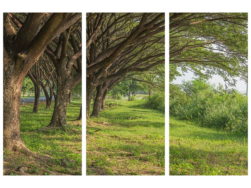 3 Piece Self-Adhesive Poster Mature Trees