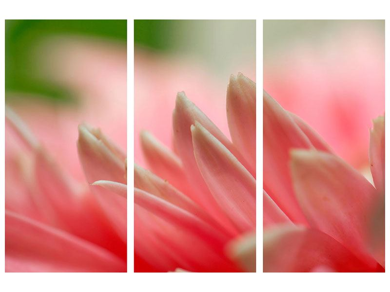 3 Piece Self-Adhesive Poster Close Up Of A Flower