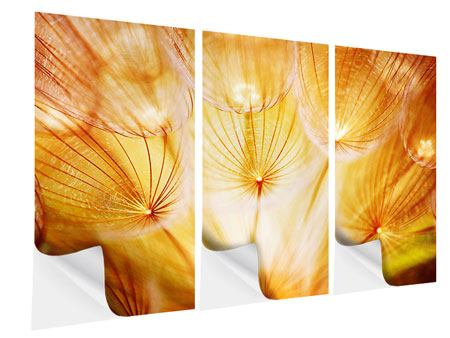 3 Piece Self-Adhesive Poster Close Up Dandelion In Light