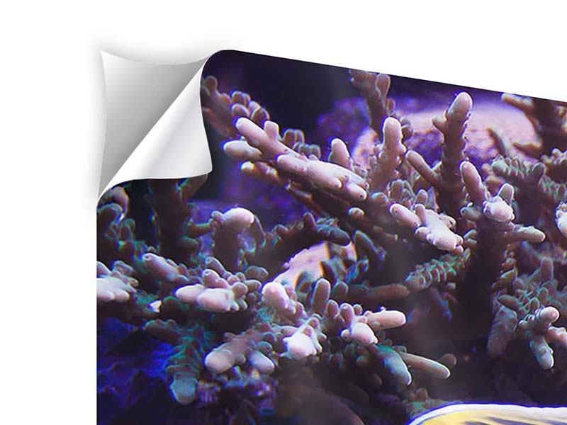 Panoramic 3 Piece Self-Adhesive Poster Fascination Underwater