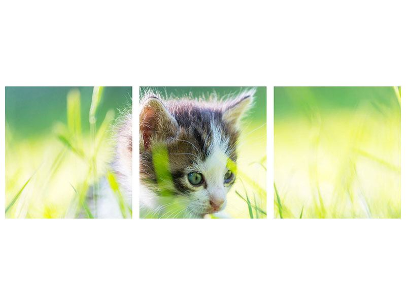 Posters adhesif en 3 parties Panoramique Chaton