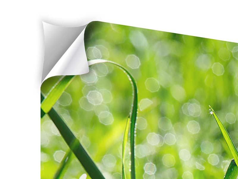 Modern 3 Piece Self-Adhesive Poster Sunny Grass