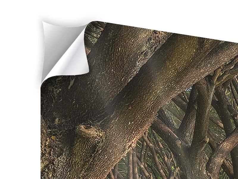 Modern 4 Piece Self-Adhesive Poster Mature Trees