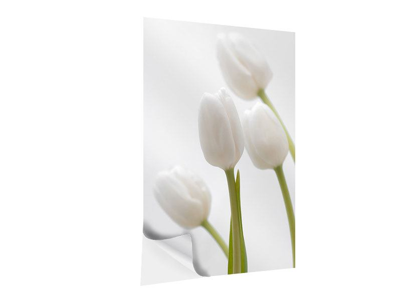 Self-Adhesive Poster White Tulips