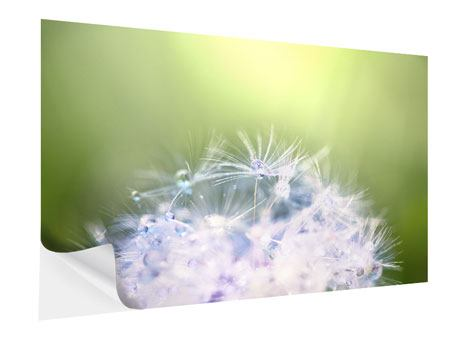 Self-Adhesive Poster Dandelion XL In Morning Dew