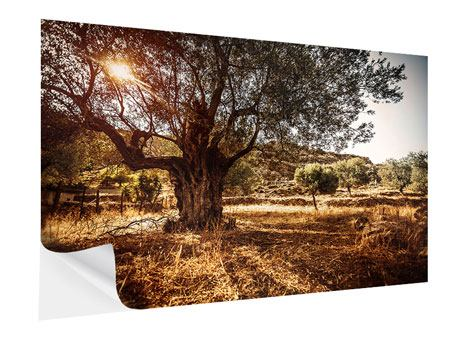 Self-Adhesive Poster Olive Grove