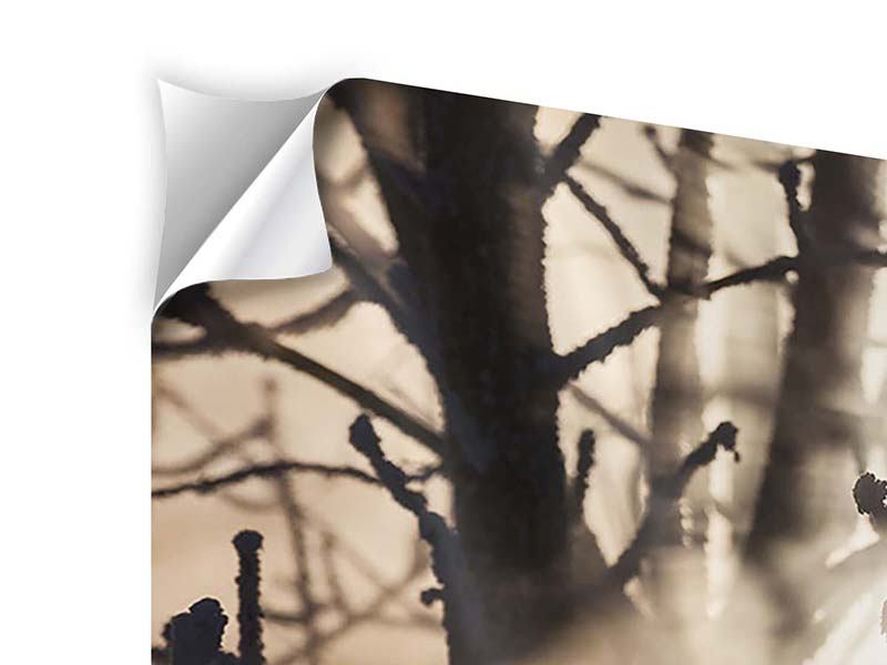 5 Piece Self-Adhesive Poster Branches In Fog Light