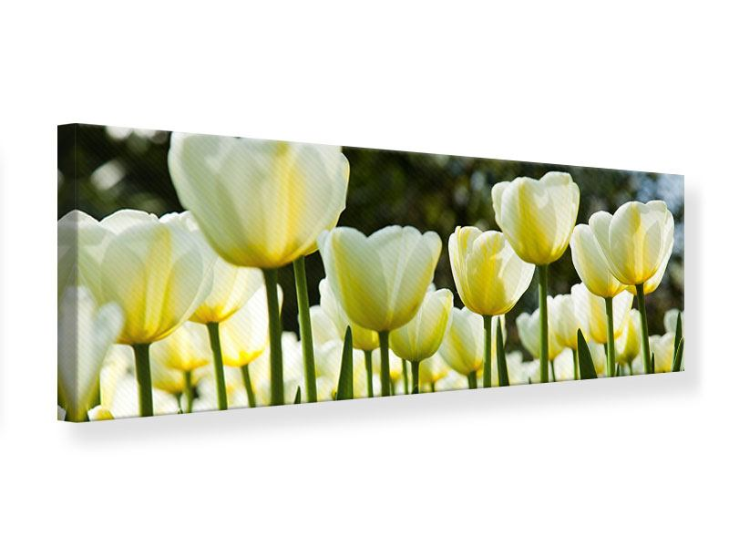 Panoramic Canvas Print Tulips At Sunset