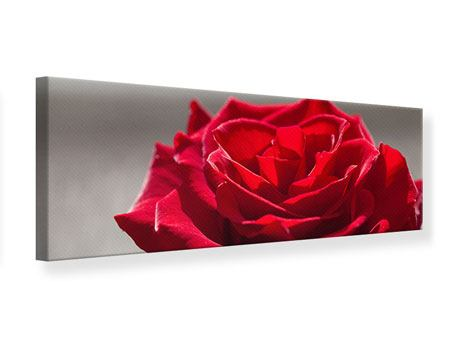 Panoramic Canvas Print Red Rose Blossom