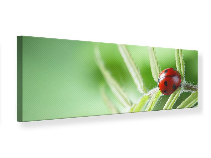 Panoramic Canvas Print Ladybug XXL
