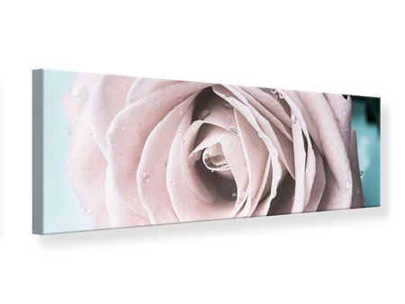 Panoramic Canvas Print Pastel Rose