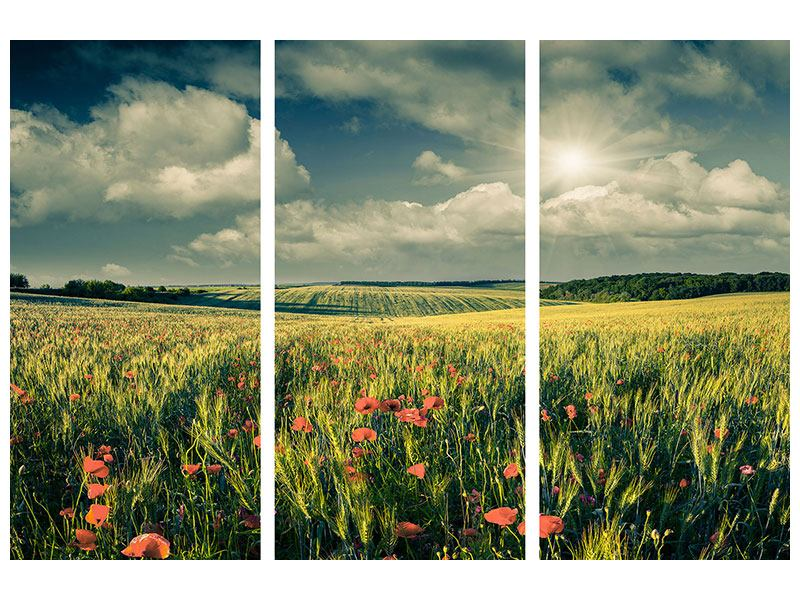 3 Piece Canvas Print The Poppy In Wheat Field