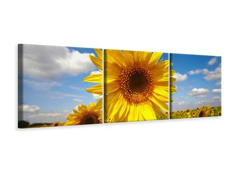 Panoramic 3 Piece Canvas Print Field Of Sunflowers