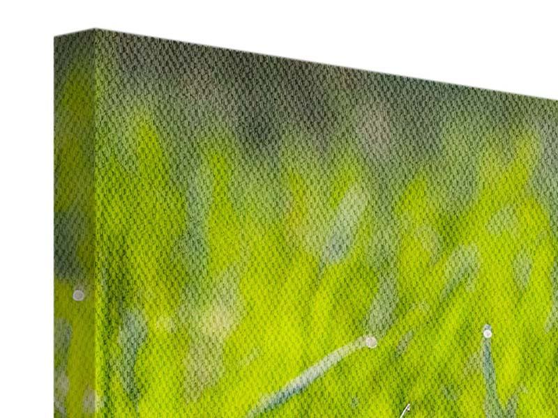 Panoramic 3 Piece Canvas Print Bright Grass In Morning Dew