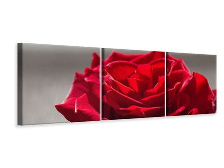 Panoramic 3 Piece Canvas Print Red Rose Blossom