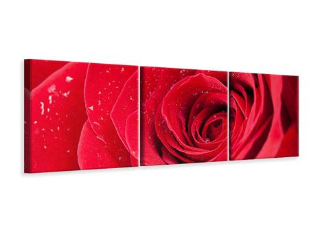 Panoramic 3 Piece Canvas Print Red Rose In Morning Dew
