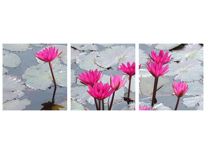 Panoramic 3 Piece Canvas Print Jump In The Lily Pond