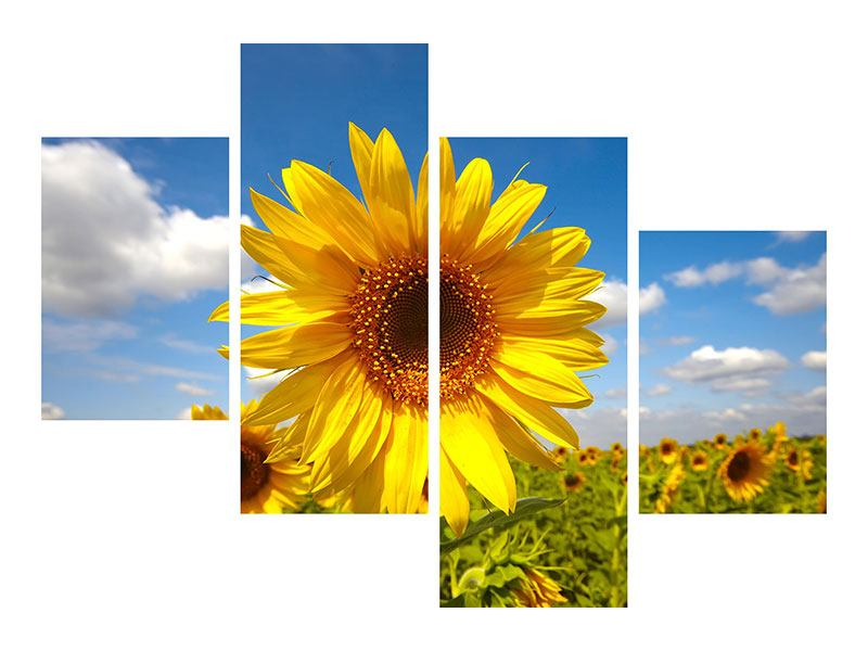 Modern 4 Piece Canvas Print Field Of Sunflowers