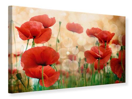 Canvas Print The Poppy