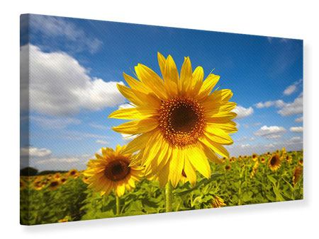 Canvas Print Field Of Sunflowers