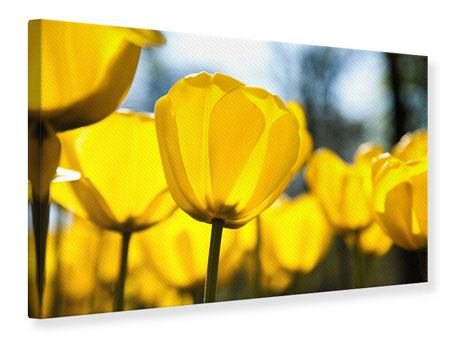 Canvas Print Yellow Tulips In XXL