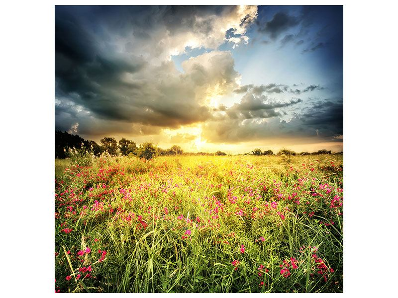 Canvas Print Flowers Landscape
