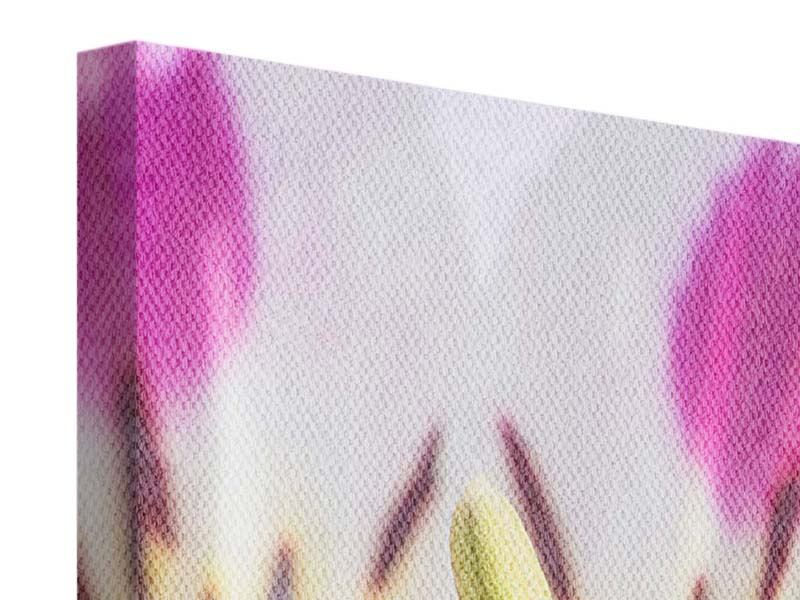 Canvas Print Close Up Tiger Flower