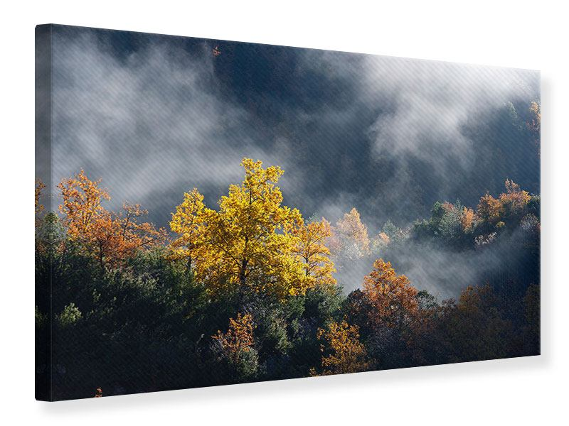 Canvas Print Moonlight Forest