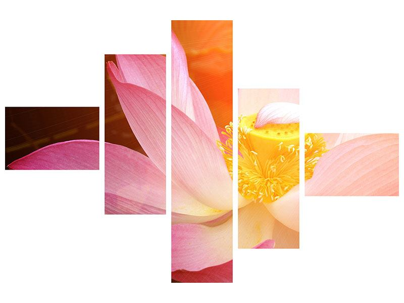 Modern 5 Piece Canvas Print Close Up Lotus