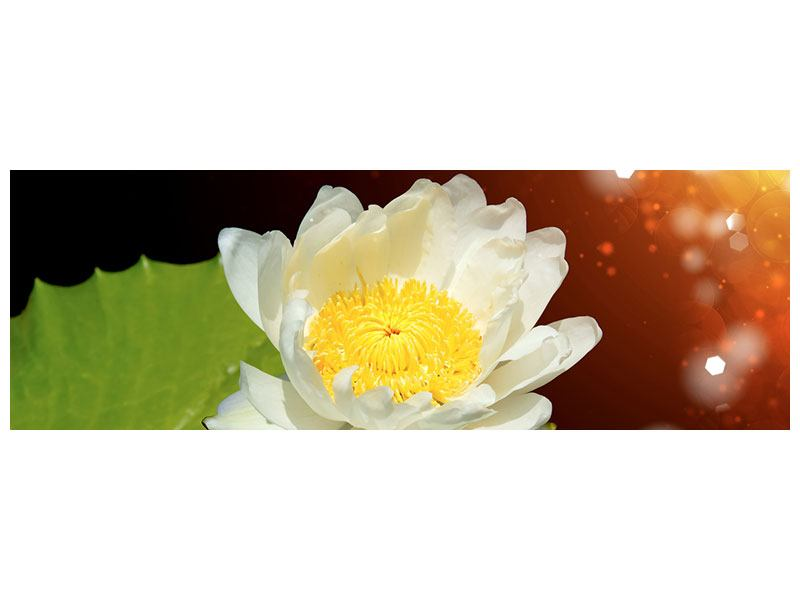Panoramic Metallic Print Water Lily In The Moonlight