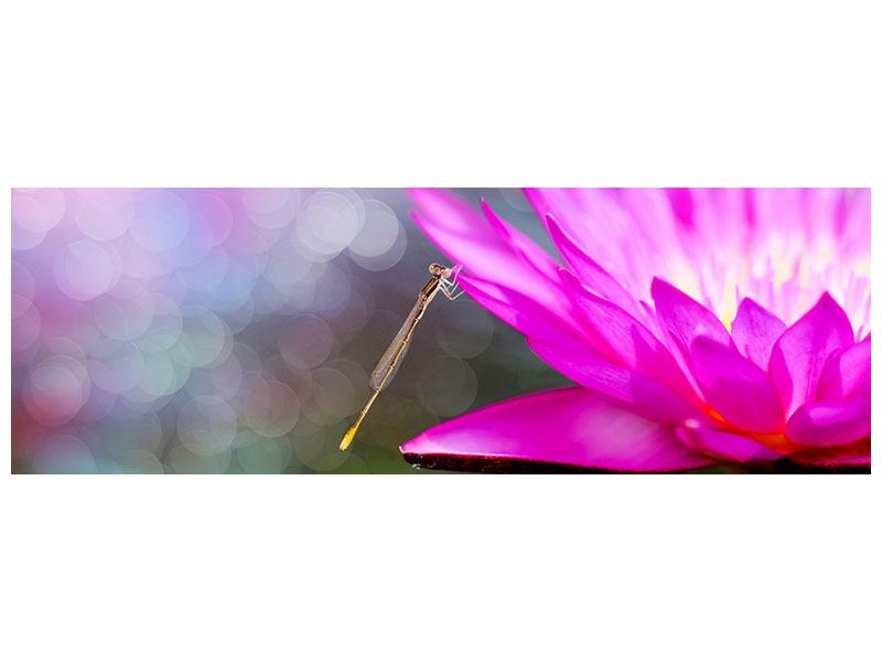 Panoramic Metallic Print Visit The Waterlily