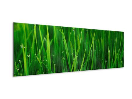 Panoramic Metallic Print Grass With Morning Dew