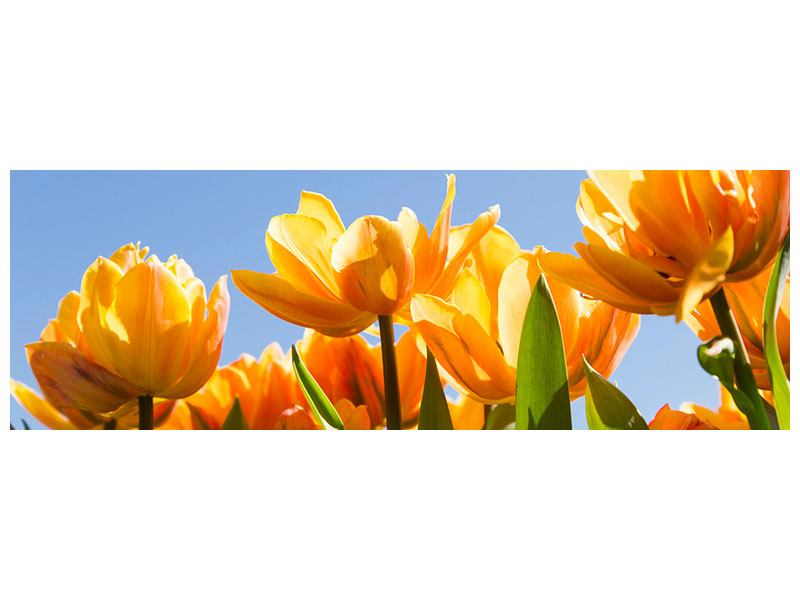 Panoramic Metallic Print Fabulous Tulips