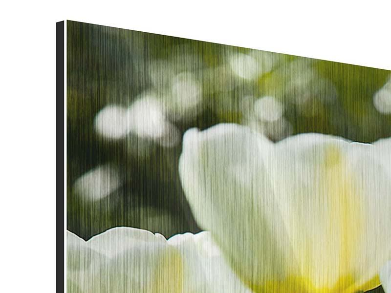 Panoramic Metallic Print Tulips At Sunset