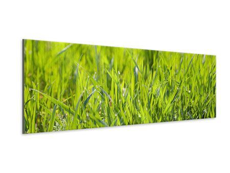 Panoramic Metallic Print Bright Grass In Morning Dew