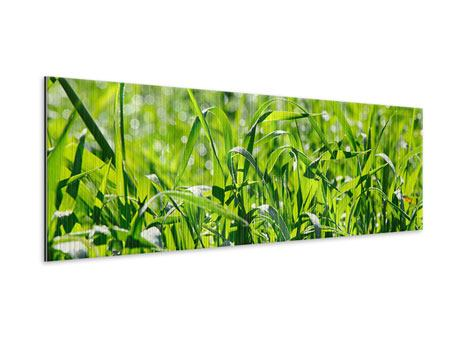 Panoramic Metallic Print Sunny Grass
