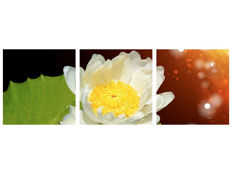 Panoramic 3 Piece Metallic Print Water Lily In The Moonlight