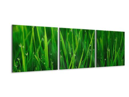 Panoramic 3 Piece Metallic Print Grass With Morning Dew
