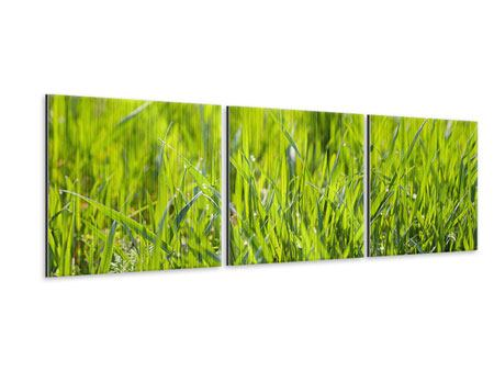 Panoramic 3 Piece Metallic Print Bright Grass In Morning Dew