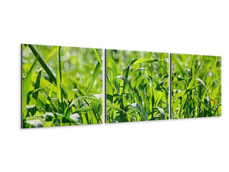 Panoramic 3 Piece Metallic Print Sunny Grass