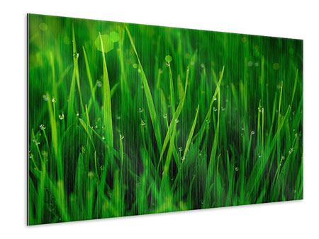Metallic Print Grass With Morning Dew