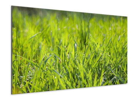 Metallic Print Bright Grass In Morning Dew