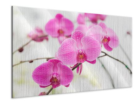 Metallic Print The Symbol Of Orchid