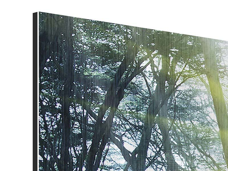 5 Piece Metallic Print Sunbeams In The Forest