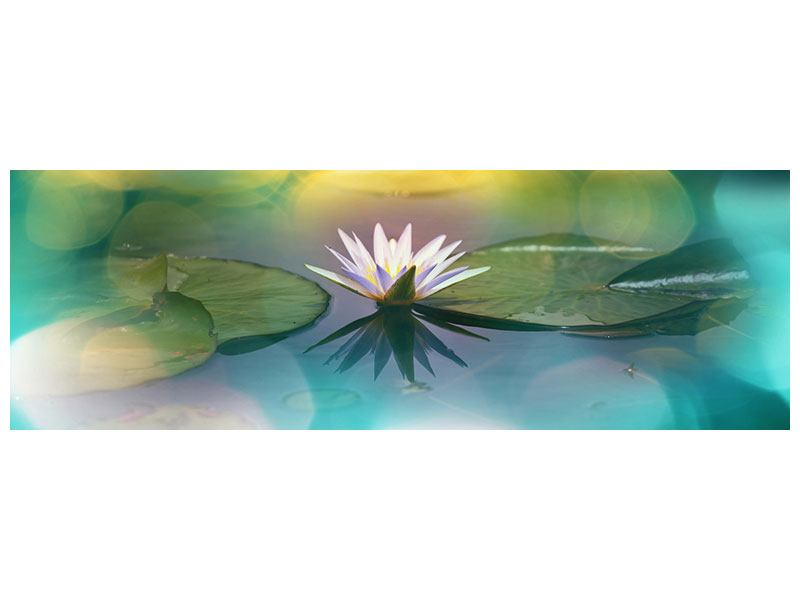 Panoramic Poster Lotus Reflection