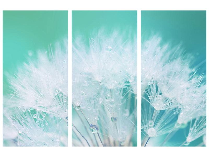 3 Piece Poster Close Up Dandelion In Morning Dew