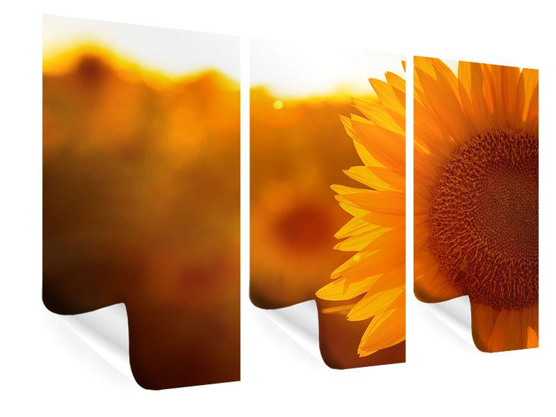 3 Piece Poster Macro Sunflower